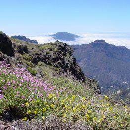 Bloemen op de top van La Palma